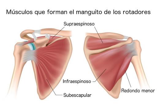 Programa de entrenamiento para la prevención del manguito rotador (hombro)